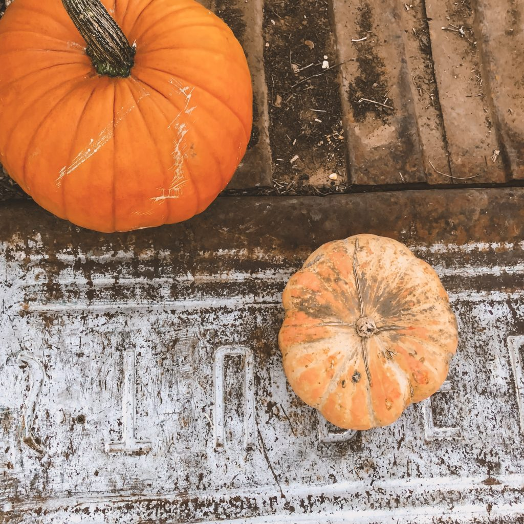 pumpkin-patch-picture-tips