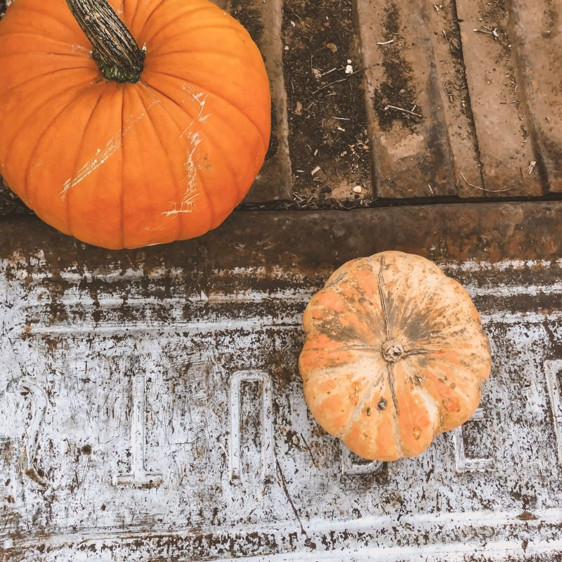 My 4 Best Pumpkin Patch Picture Tips